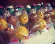 Easter cake pops x